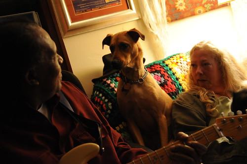Mack and Rosie meet, Jeanette, Lake City, Seattle, Washington, USA by Wonderlane