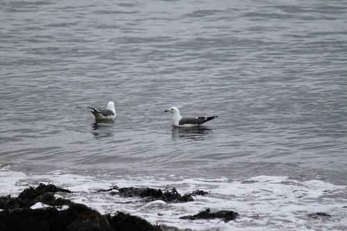 波打ち際の鳥