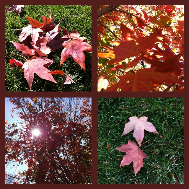 Fall8Collage