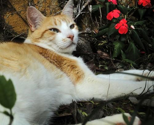Pingo no quintal