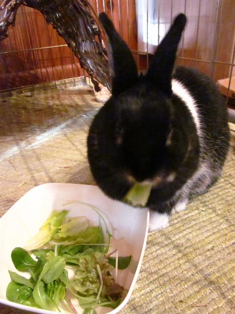 Bunny salad.