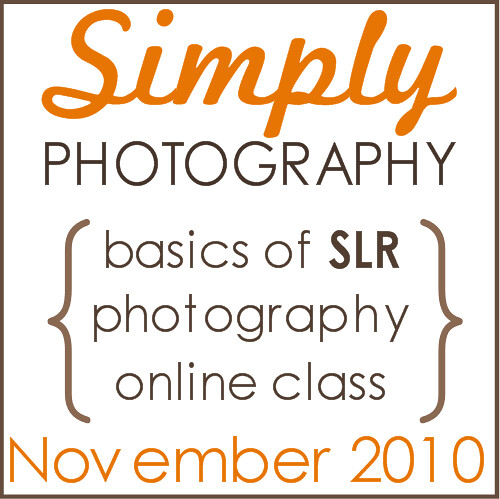 FALL BASIC blog button ad NOV