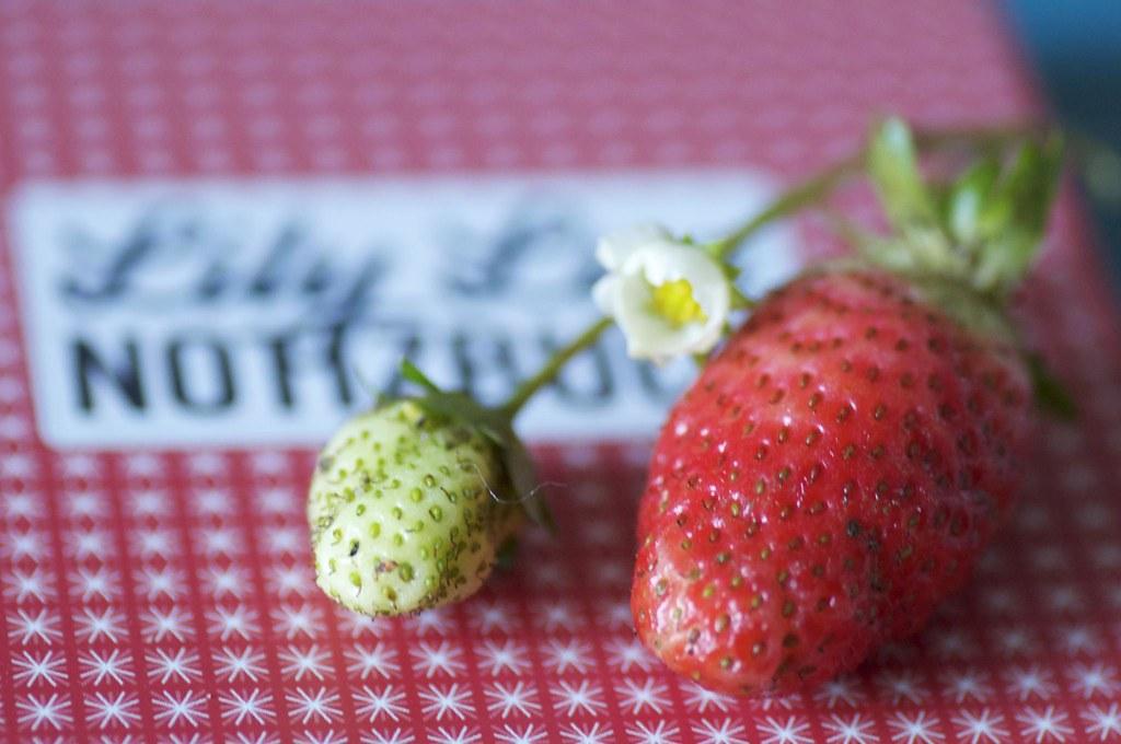Foto einer Erdbeere im November als Herbstglück für Lily Lux