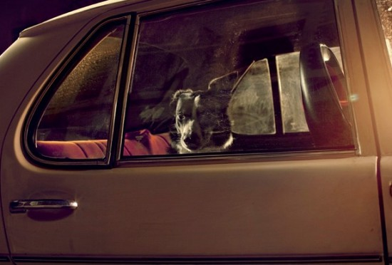 dogscar4-550x372