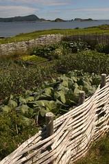 Ferryland Fields (Newfoundland and Labrador Tourism) Tags: history tourism newfoundland labrador link coastline avalon newfoundlandandlabrador topdestination newfoundlandandlabradortourism