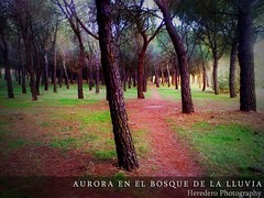 Aurora En El Bosque De La Lluvia (Dawn In The Rain Forest) (#68 Project Music Vs. Photo) (Heredero 3.0) Tags: pink autumn espaa tree verde green fall nature rain arbol lluvia spain rosa natura bosque aurora otoo instrumental zamora 2010 valorio