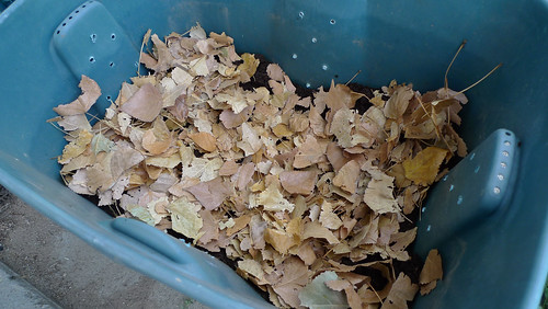 compost bin with leaves