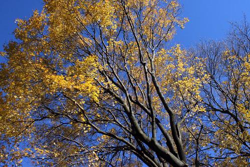 tree 073