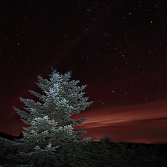 Pick a Star ... make a wish (janusz l) Tags: longexposure light lightpainting tree oregon stars bravo late viewpoint janusz leszczynski pickastar sunsethwy 002218