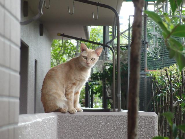 Today's Cat@2010-11-14