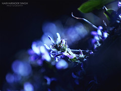 Even I'm BEAUTIFUL ! (Harvarinder Singh) Tags: theunforgettablepictures harvarindersinghphotography harvarindersingh