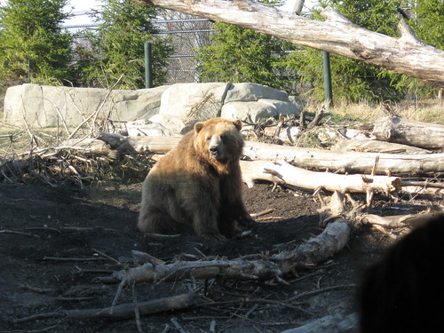 The brown bears were putting on a show