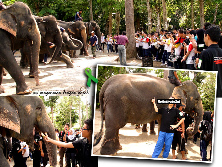 Pusat Konservasi Gajah - elephant introduction