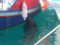 foca monje mediterraneo