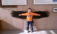 an eagle's wingspan (and Otto's)