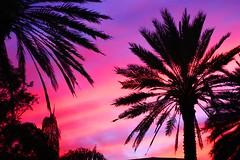 Miami Sunset (WeeLittlePiggy) Tags: pink sunset tree beach purple florida miami postcard palm southbeach