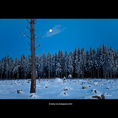 loneliness (stella-mia) Tags: winter moon snow norway forest frost loneliness explore frontpage sn 2470mm canon5dmkii