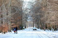 Heavy Snowfall 21 (G Fox) Tags: trees ireland winter people dog white s