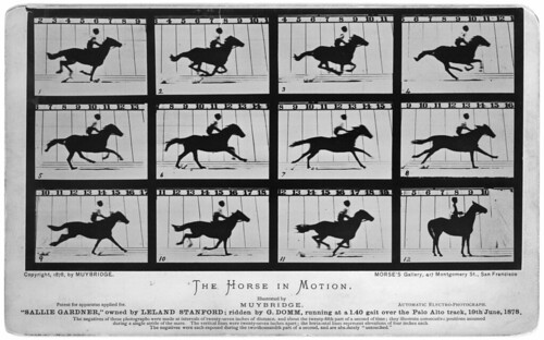 'The Horse in Motion' (Sallie Gardner, owned by Leland Stanford), 1878
