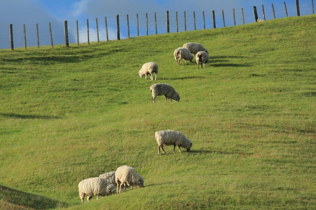 IMAGE: http://farm5.static.flickr.com/4088/5225144816_3b840bdf3c_b.jpg