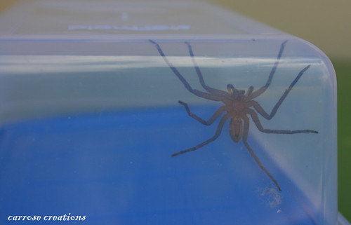 PAD 01.02.11 Spider