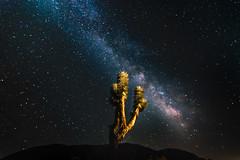 Milky Way (Chigrboy2012) Tags: milky way joshua tree california universe