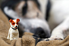 Jack Russel(s) (Marian Kloon (on and off)) Tags: miniature odc jackrussel dog