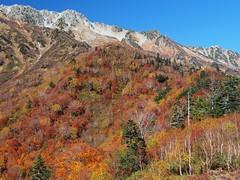 Kurobedaira II (tanxiaolian91) Tags: japan japanesealps hike mountains koyo tree