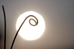Un monocle pour Hélios (Emmanuelle2Aime2Ailes) Tags: silhouette contrejour vrille soleil abstraction