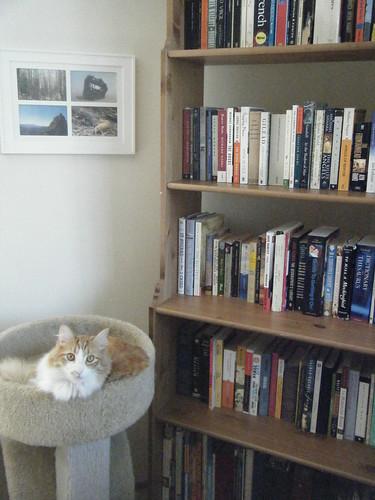 cat model.