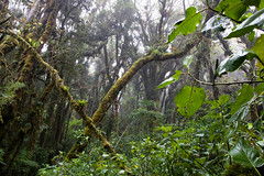 MC070051 (naturhighlights) Tags: nature landscape rainforest costarica country natur style landschaft centroamrica stil regenwald mittelamerika centralamerika geocity camera:make=canon exif:make=canon exif:iso_speed=100 camera:model=canoneos20d exif:focal_length=17mm geostate exif:model=canoneos20d exif:aperture=11 exif:lens=170350mm geo:countrys=costarica