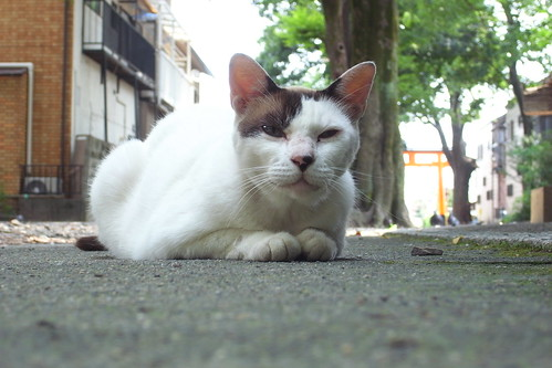 Today's Cat@2010-08-01