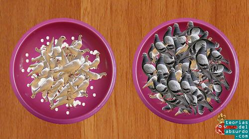 bol de palomas blancas vs y cuenco de palomas grises