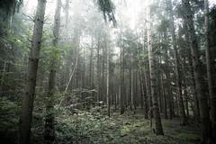 ([Graneth]) Tags: wood trees mist nature fog canon eos nebel natur tokina 7d wald bume 1224