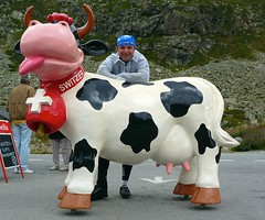 Mooo (will_cyclist) Tags: alps cycling switzerland coxs cowsx