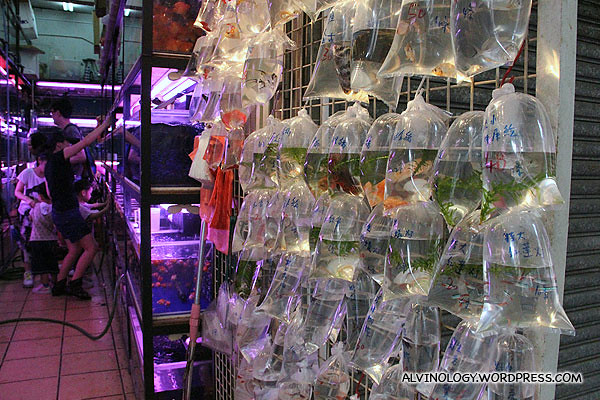 One of the many fish shops around
