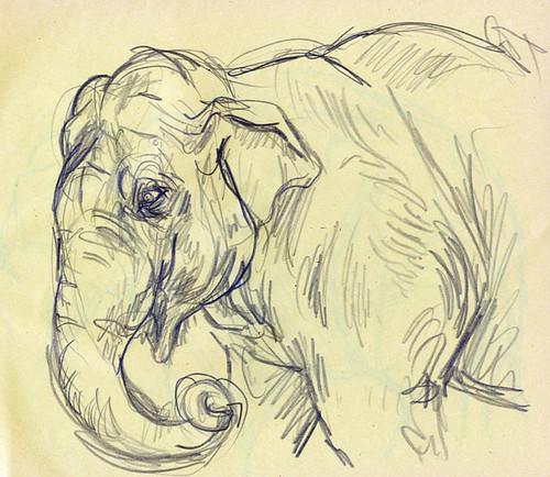 elephant_headweb