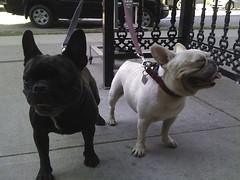 dog vancouver traveldog
