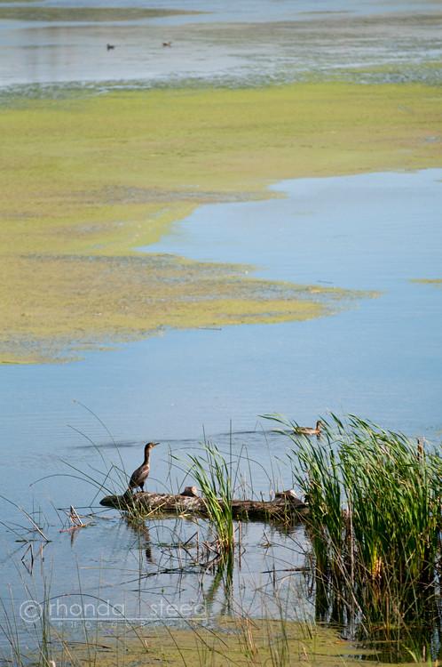 Aug 22 - Birds