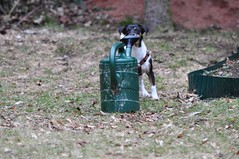 Giee mich (pitny) Tags: dog cute nikon sweet emma terrier hund jackrussell d90 ss