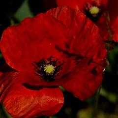 bella flora non identifia (lachaisetriste) Tags: nature fleur nikon été campagne flore touraine d700 4tografie