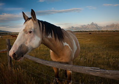 will pose for food (windybug) Tags: ranch horses horse mountains nature animal animals canon fence natural scenic hills wyoming 1855mm tetons canonefs1855mm tetonrange grandtetonnationalpark canon1855mm 50d canon50d img7132 bestof2010 epicroadtripthewest