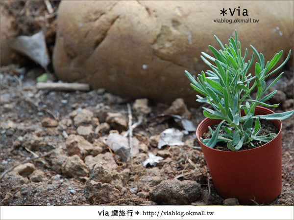 【彰化】彰化藝術高中~教室與森林結合的美麗校區21