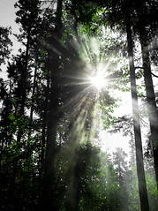 Don't hide from me (The Last Reply) Tags: camping trees light sun fire glare smoke campfire flare campground