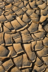 Dry desert - Explore (TARIQ-M) Tags: abstract texture desert dry abstraction barren riyadh saudiarabia potofgold  canonefs1855  crackedearth   drydesert  canon400d
