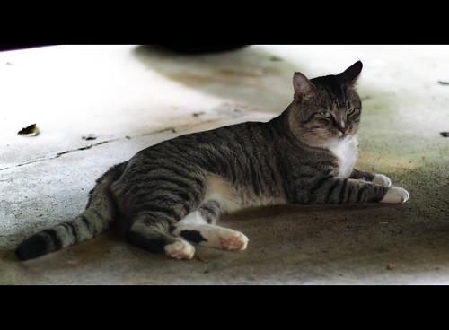 Day 253 - Tomcat