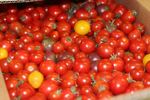 Yowza! Tomatoes