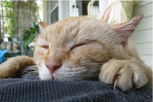 cute feral ginger cat sleeping