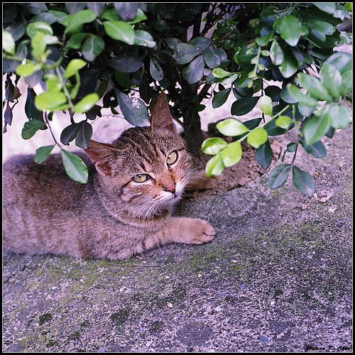 20100920-houtong_cat.jpg