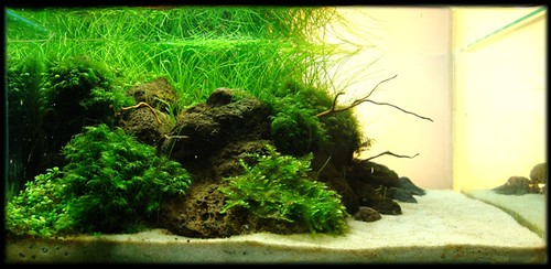 Charmant Indonesian Aquascaping Contest Entry By Fadhlillah Maulana: